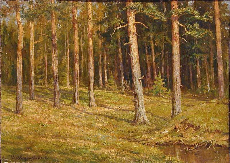 Pinery. Ivan Ivanovich Shishkin