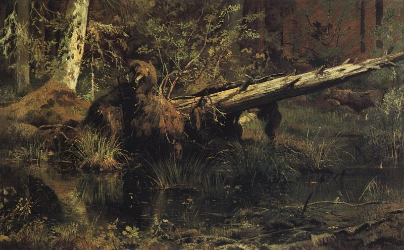 Forest (Shmetsk near Narva). 1888 35h59. 5. Ivan Ivanovich Shishkin