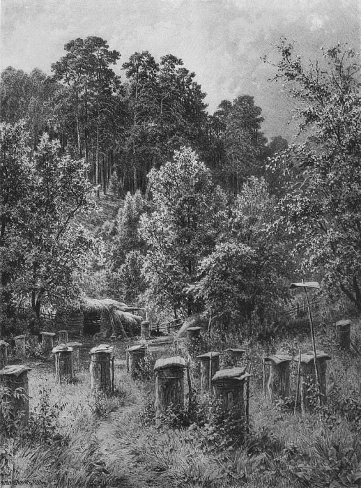 Apiary 1884 90 69. Ivan Ivanovich Shishkin