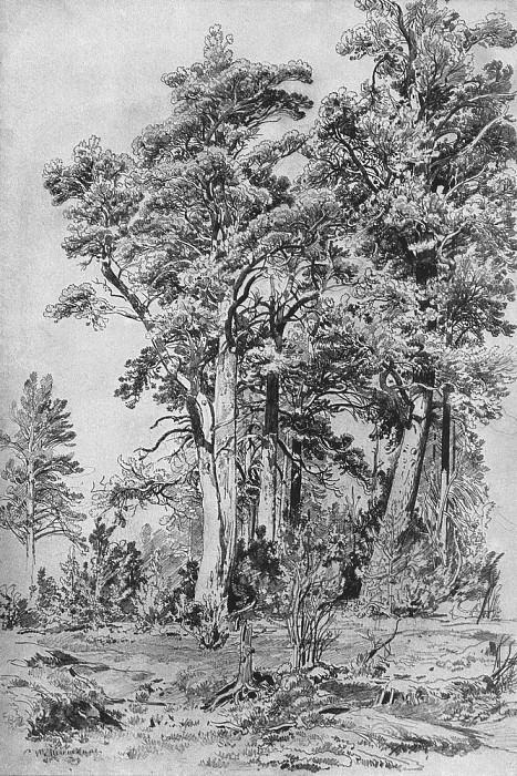 In the forest 1889 69. 1h40, 1. Ivan Ivanovich Shishkin
