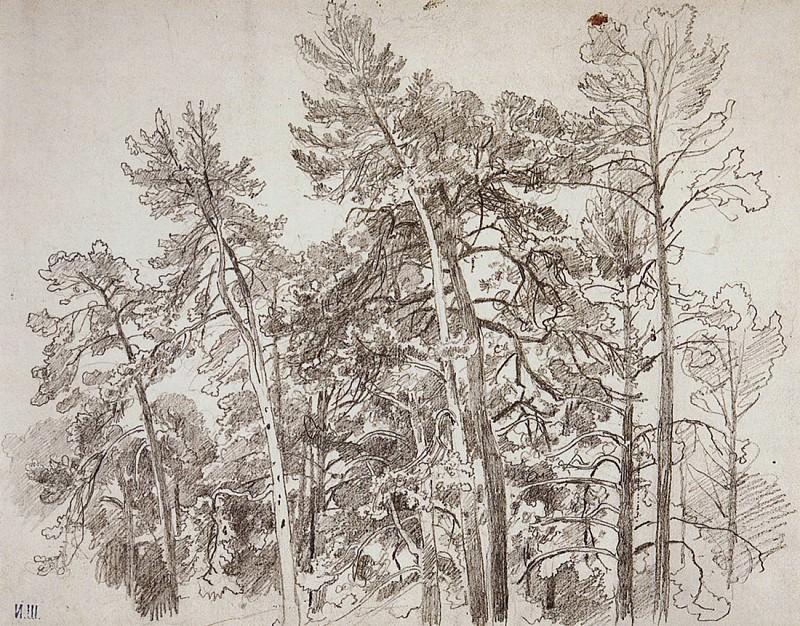 tops of the pines. 1890 32, 5h41, 8. Ivan Ivanovich Shishkin