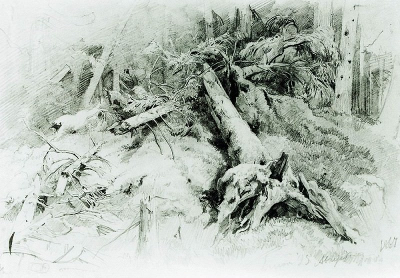 deadfall 1867 Paper. graph. pencil. Ivan Ivanovich Shishkin
