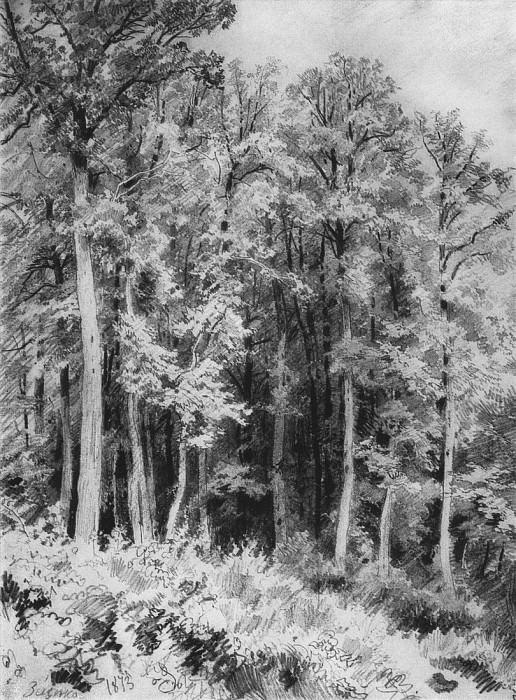 Trees. Kozlivka-Zaseka. 1873 31h22, 5. Ivan Ivanovich Shishkin