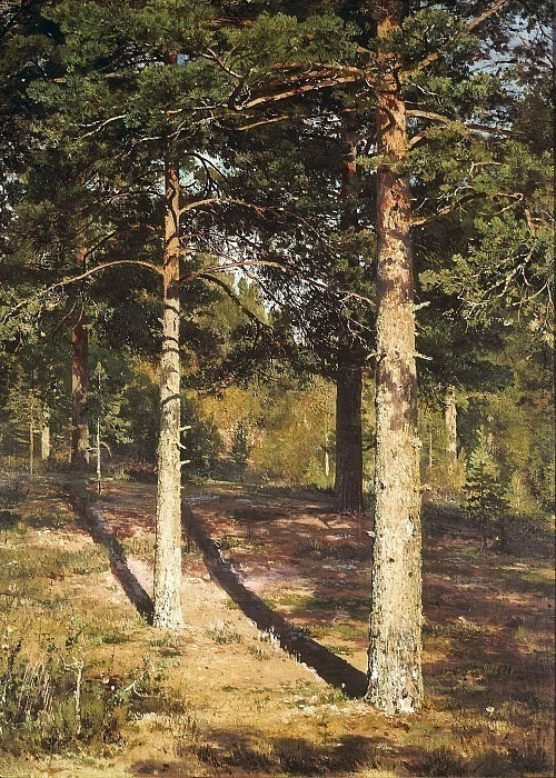Pine trees lit by the sun. Ivan Ivanovich Shishkin