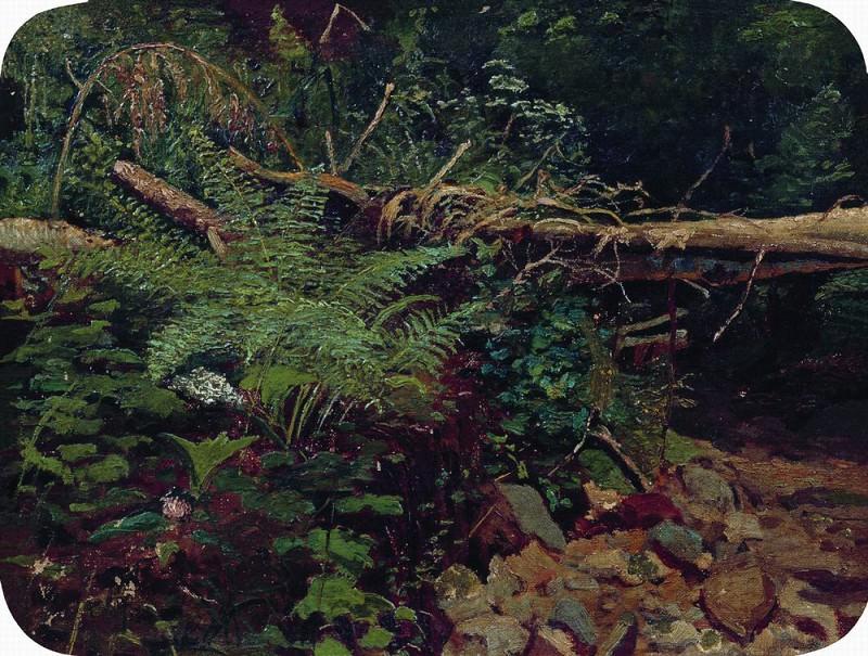 Landscape 1896 22H36. Ivan Ivanovich Shishkin
