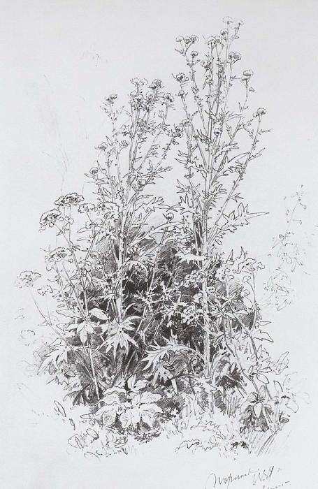 Wildflowers 1884 45h29. Ivan Ivanovich Shishkin