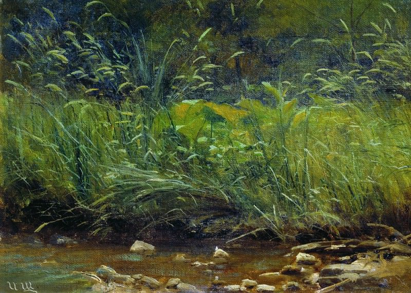 Beach pond 1880h90gg. 29h4o 5. Ivan Ivanovich Shishkin