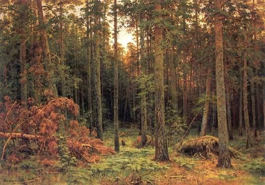 Pine les1885. Ivan Ivanovich Shishkin