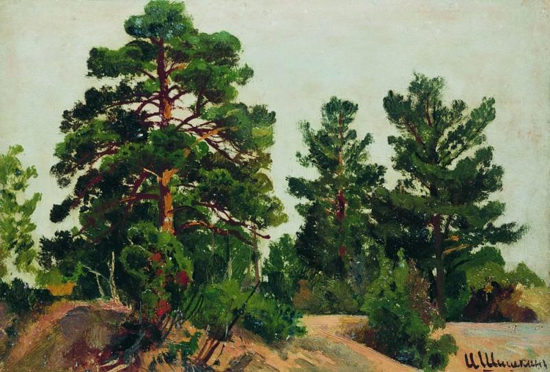Young pine 19h26. Ivan Ivanovich Shishkin