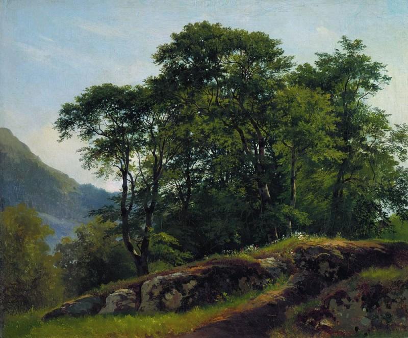 Beech forest in Shveytsarii1863 51h61. 5. Ivan Ivanovich Shishkin