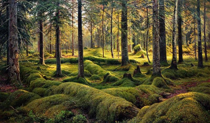 old fallen trees. Forest Cemetery 1893 104h176. 5. Ivan Ivanovich Shishkin