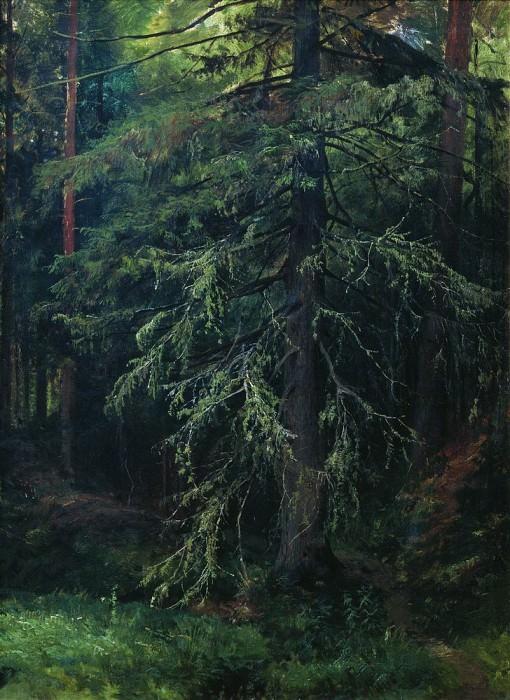Spruce. Etude 77h58. Ivan Ivanovich Shishkin