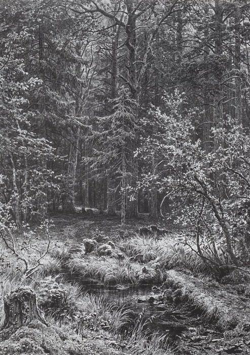 marshland is 1889 85 5h65. Ivan Ivanovich Shishkin