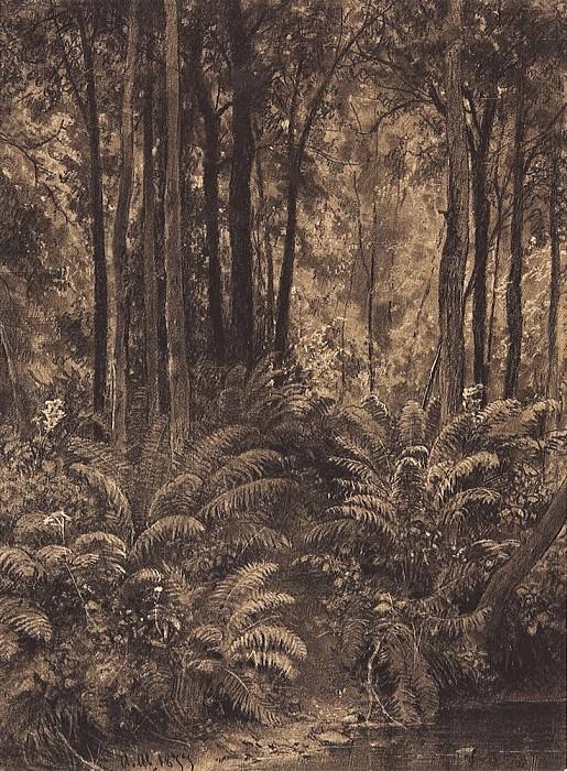 Ferns in the woods. 1877 28, 4h21. Ivan Ivanovich Shishkin