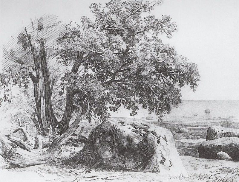 Дуб на берегу Финского залива. 1857 23х30. Иван Иванович Шишкин