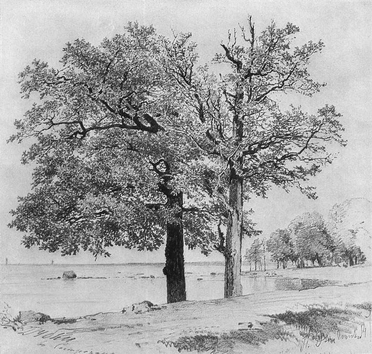 Dubky in Sestroretsk. 1880 27h28. Ivan Ivanovich Shishkin