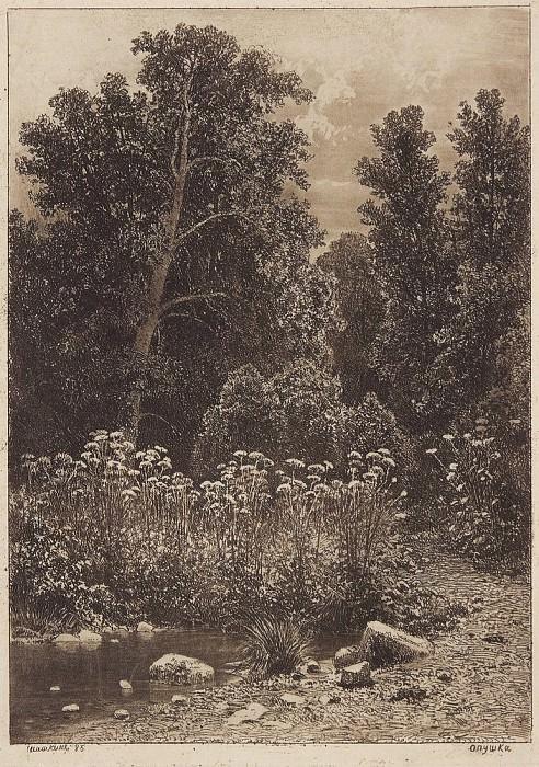Edge. 1885 24, 1h17, 5. Ivan Ivanovich Shishkin