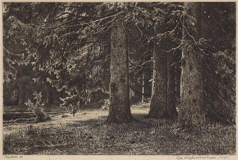 Eli (Eli in Shuvalov park). 1886 23, 3h33, 2. Ivan Ivanovich Shishkin