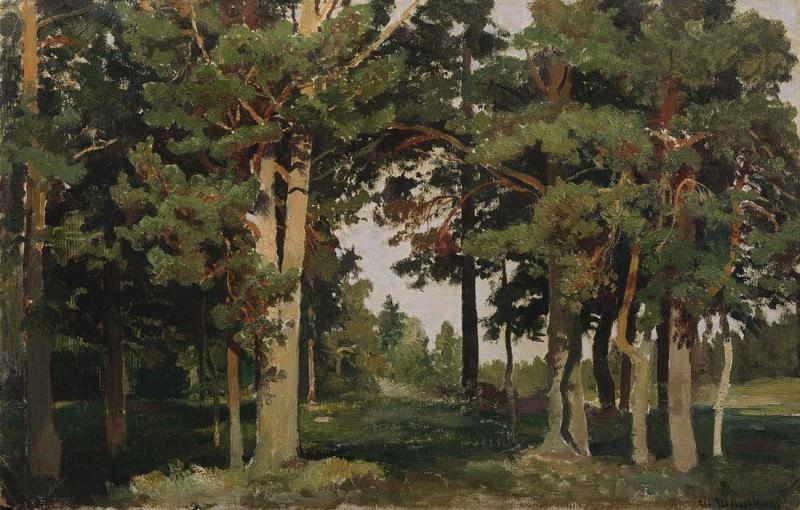 Forest. 1893. Etude 36h55, 5. Ivan Ivanovich Shishkin