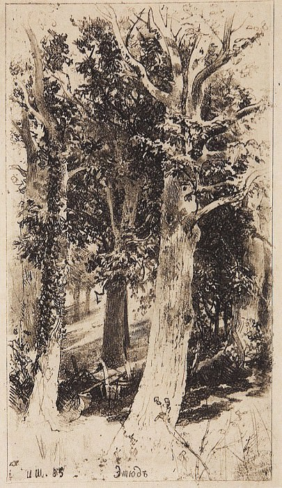 Etude. 1885 21h12, 2. Ivan Ivanovich Shishkin
