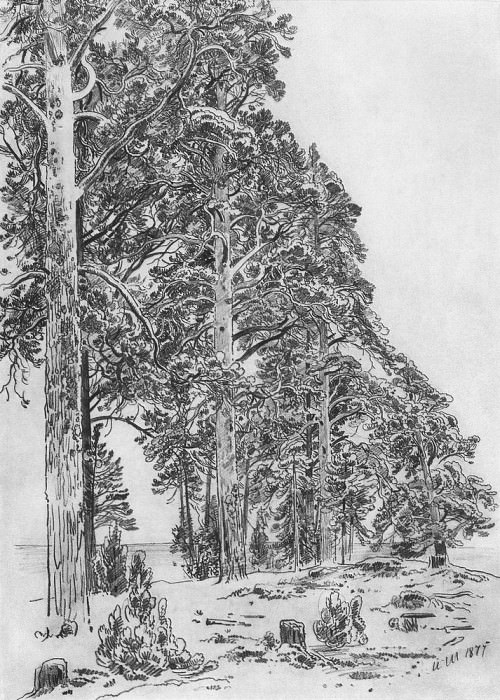 Pine trees on the beach 1877 58, 4h41, 1. Ivan Ivanovich Shishkin