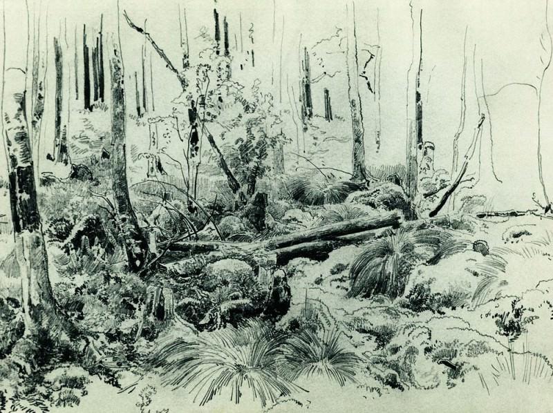 In the thicket 1870 24. 2h32. 5. Ivan Ivanovich Shishkin
