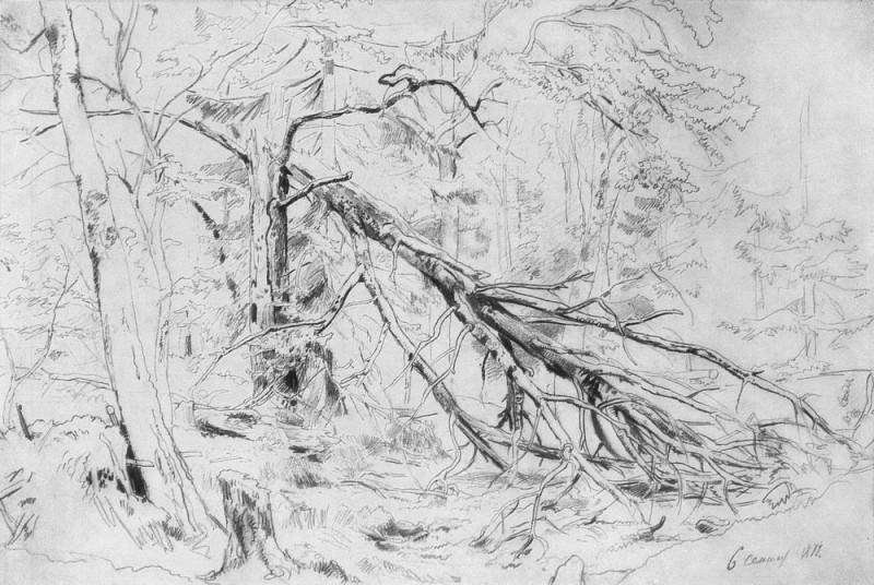 Broken Birch 1872 38h53, 4. Ivan Ivanovich Shishkin