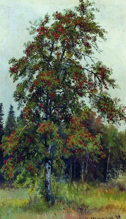Rowan 1892 58h33. 3. Ivan Ivanovich Shishkin