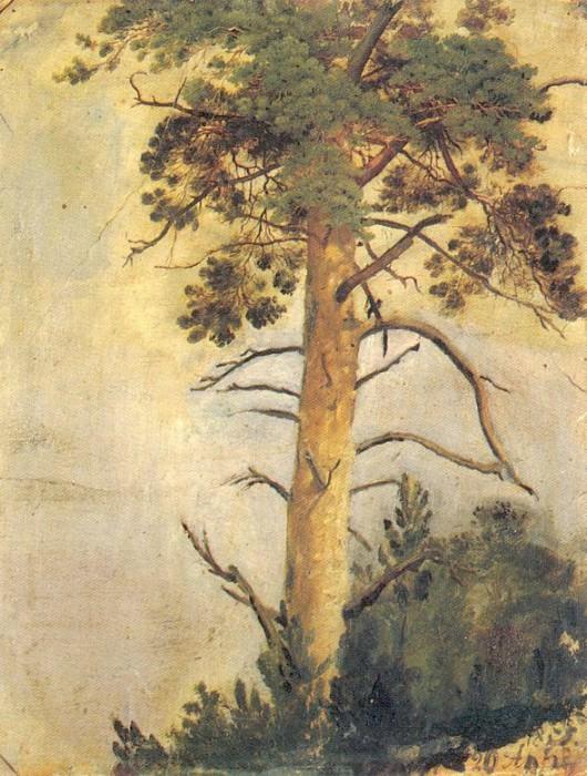Сосна на скале. 1855 39х31. Иван Иванович Шишкин