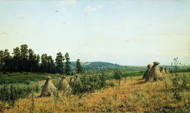 Compressed field. Polesskii landscape 1884 71. 5h117. 5. Ivan Ivanovich Shishkin