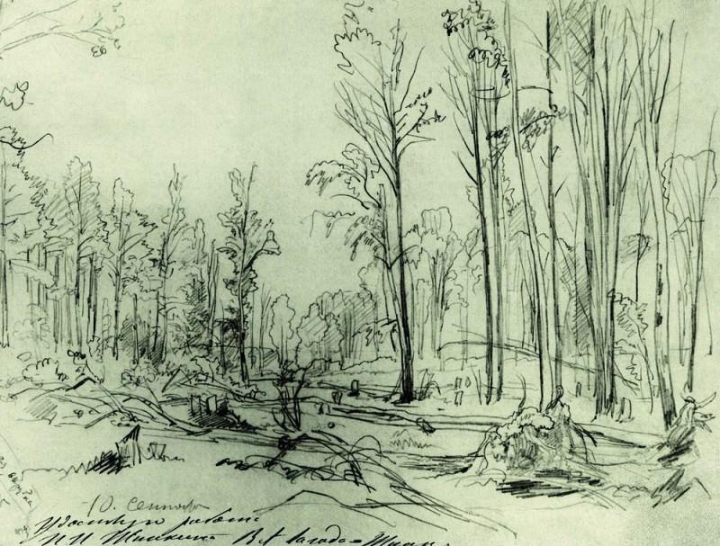 Лесная вырубка 1870-е 24х32. Иван Иванович Шишкин