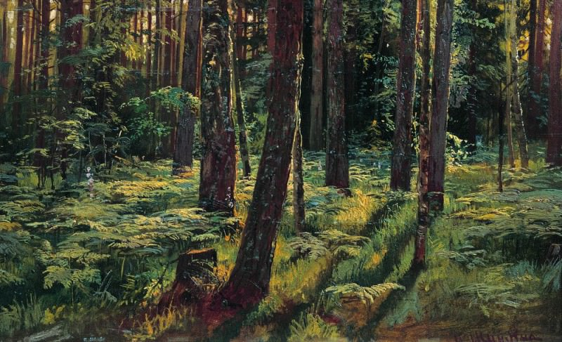 Ferns in the woods. Siverskaya 1883 36, 2h59. 6. Ivan Ivanovich Shishkin