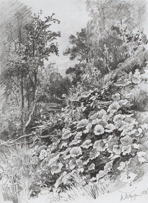 Мать-и-мачеха 1878 31х22. Иван Иванович Шишкин