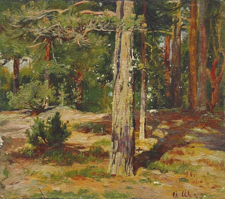 Pines. Ivan Ivanovich Shishkin