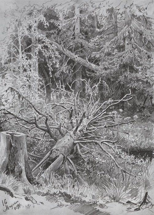 In the woods. Fallen Tree 1878 32. 3h23, 4. Ivan Ivanovich Shishkin