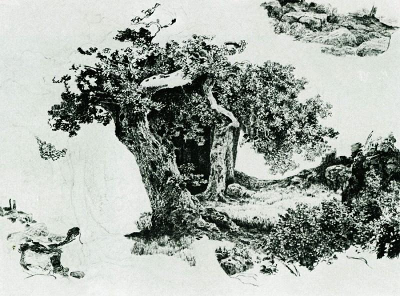 Группа лиственных деревьев и камни. Набросок 24х32. Иван Иванович Шишкин