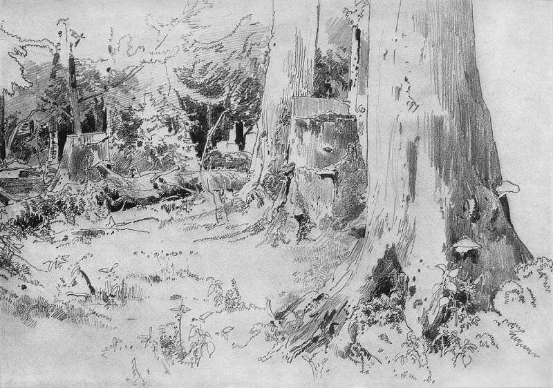 Вырубленный лес 1880-е 22. 3х32. Иван Иванович Шишкин