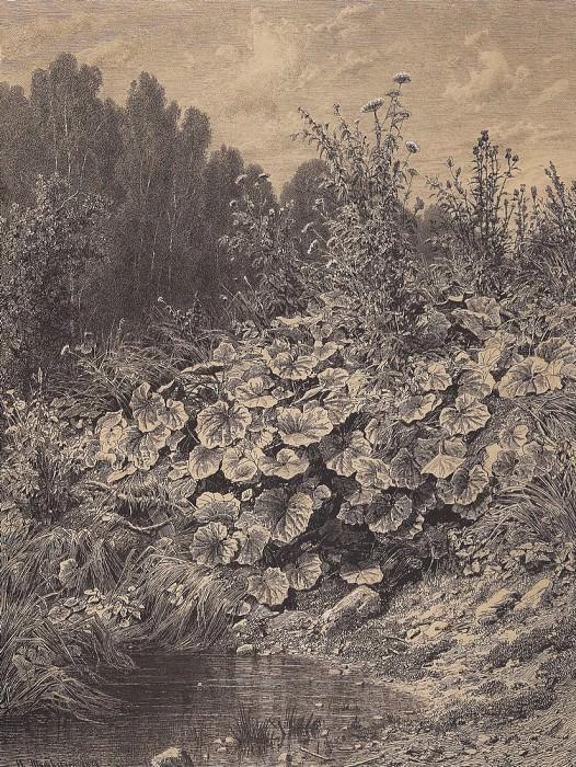 coltsfoot. 1874 66h49, 3. Ivan Ivanovich Shishkin