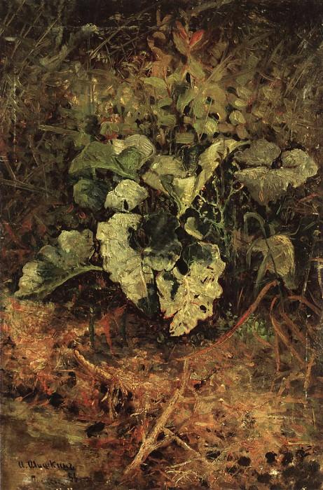 burdock. End of 1880 37, 3h24, 7. Ivan Ivanovich Shishkin