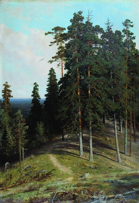 Forest from the mountain. 1895 106, 4h73. Ivan Ivanovich Shishkin