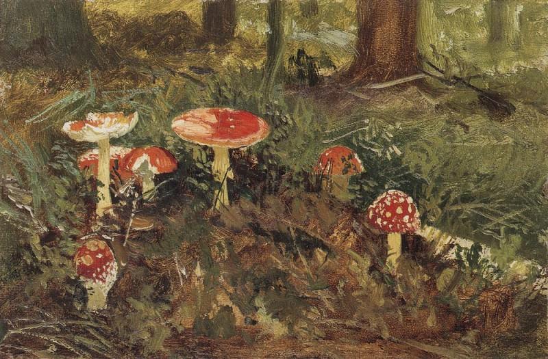 Amanita. Etude 1878-1879 12, 8h19, 6. Ivan Ivanovich Shishkin