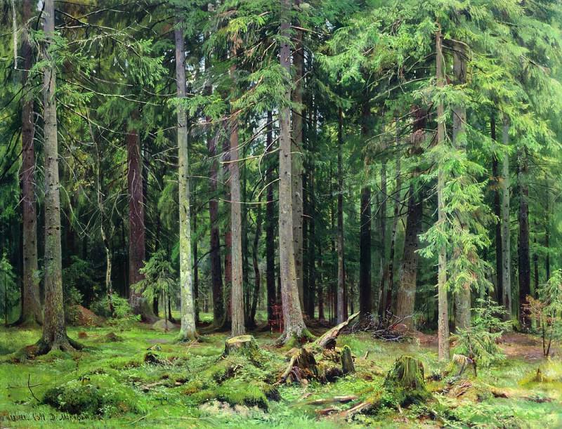 Forest in Mordvinova. 1891 83h110. Ivan Ivanovich Shishkin