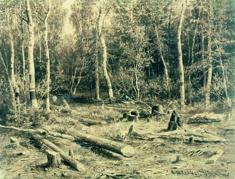 Forest landscape. Cardboard, sepia 51h66, 5. Ivan Ivanovich Shishkin