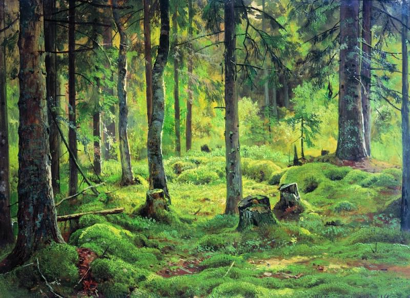 deadwood. Etude 1893. Ivan Ivanovich Shishkin