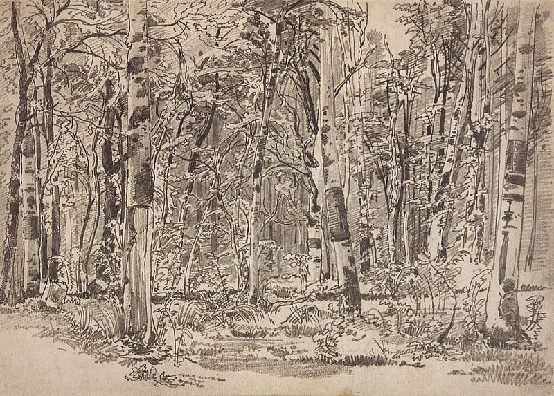 Birchwood. The second half of 1870 21, 5h34, 8. Ivan Ivanovich Shishkin