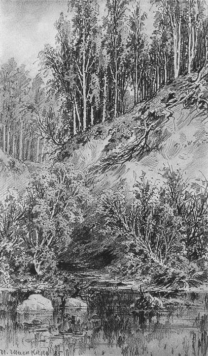 Beach brook 1885 paper, graphite. pencil 48h31. 5. Ivan Ivanovich Shishkin