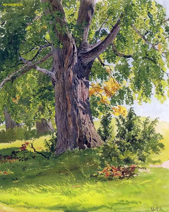 oak, sunny 26. 5x20. Watercolor on paper, bleached. Ivan Ivanovich Shishkin