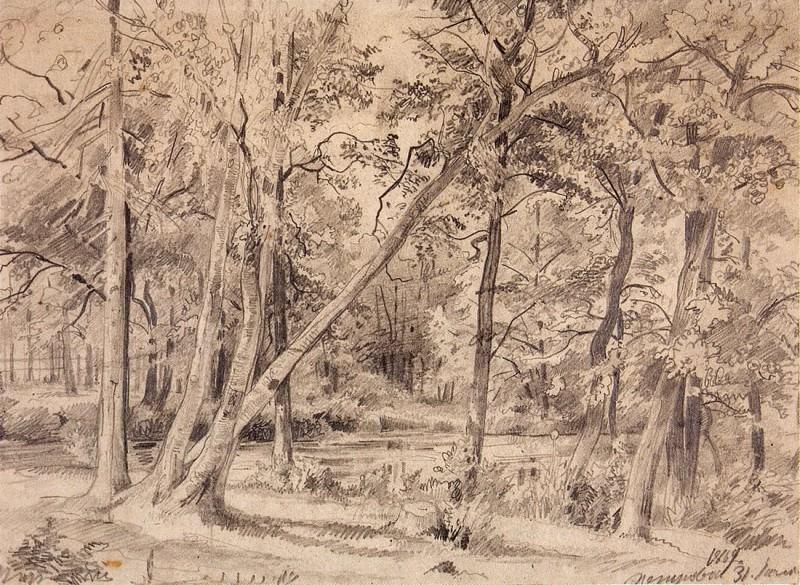 Болото на Петровском острове. 1869 23х31. Иван Иванович Шишкин