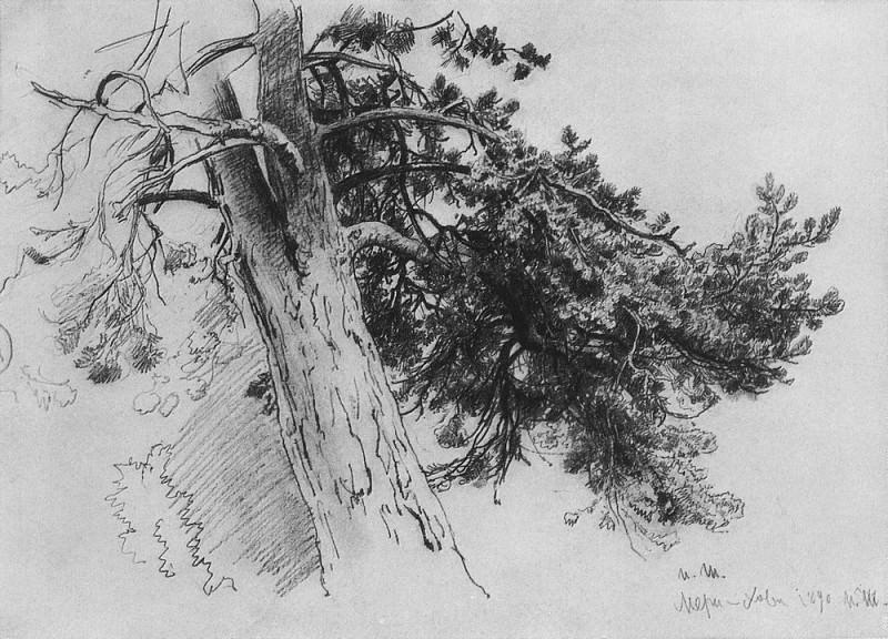 Часть ствола сосны. Мери-Хови 1890 33х48. Иван Иванович Шишкин