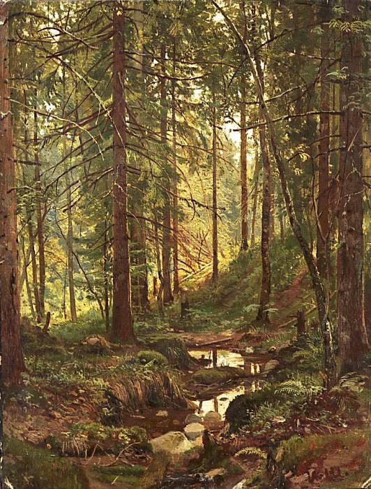 Stream in the woods. Siverskaya. Etude. Ivan Ivanovich Shishkin